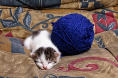 疲倦的小猫 免版税图库摄影