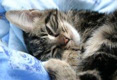 疲倦的小猫 免版税库存照片