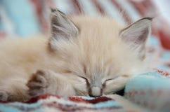 疲倦的小猫 库存照片