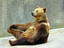 疲倦的熊 免版税库存照片