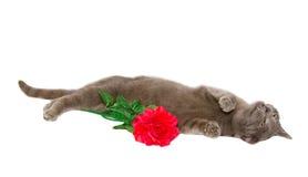 疲倦的猫 库存图片
