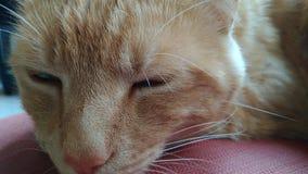 疲倦的猫 免版税库存照片