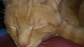 疲倦的猫 免版税图库摄影