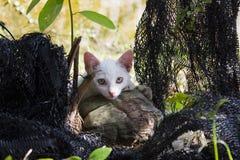 疲倦的白色猫 免版税库存图片