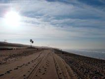 疲倦轨道和脚印在沙子与棕榈树和力量 免版税库存照片