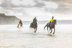 疾驰在海滩的马 免版税库存照片