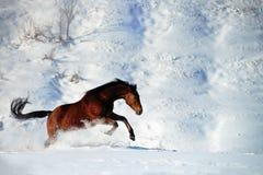疾驰的马在雪冬天 免版税库存图片