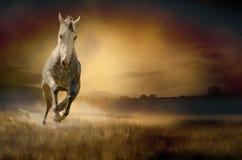 疾驰通过日落谷的马 免版税库存照片