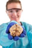病理学家在她的手上的拿着脑子 库存照片
