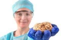 病理学家在她的手上的拿着脑子 免版税库存照片