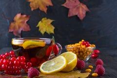 病症概念:茶用秋天莓果海鼠李、荚莲属的植物、玫瑰果、花揪和秋天叶子 与维生素C的饮料 库存图片