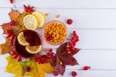 病症概念:茶用秋天莓果海鼠李、荚莲属的植物、玫瑰果、花揪和秋天叶子 与维生素C的饮料 免版税库存图片