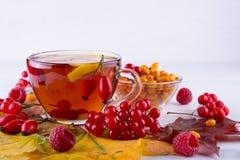 病症概念:茶用秋天莓果海鼠李、荚莲属的植物、玫瑰果、花揪和秋天叶子 与维生素C的饮料 免版税库存照片