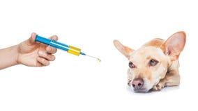 病的不适的狗 免版税库存图片