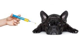 病的不适的狗 免版税图库摄影