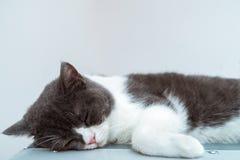 病的小猫 免版税库存照片