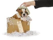 病的狗 免版税图库摄影