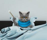 病的猫在床上 免版税库存照片