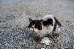 病的街道猫 免版税库存图片
