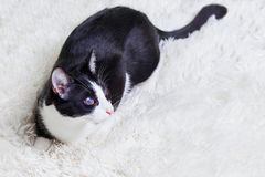 病瞎的猫,伤害,窗帘,抢救从城市街道 世界天宠物,风雨棚动物的概念 免版税库存照片