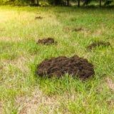 痣土地做的堆损坏了草坪 免版税图库摄影