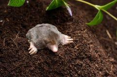 痣在土壤hol中 免版税图库摄影