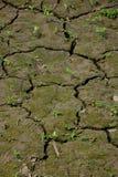 贫瘠土壤 免版税库存照片