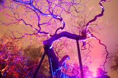 贫瘠支持的树在晚上 免版税库存照片