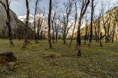 贫瘠春天森林黑暗的冷的自然 免版税图库摄影