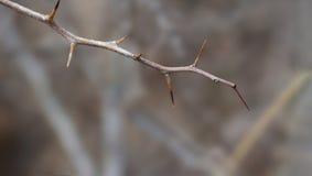 贫瘠树枝杈 免版税图库摄影