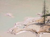 贫瘠细节, Boiling Springs湖,华纳谷 库存图片