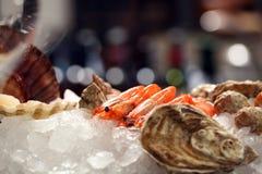 癌症用在冰的牡蛎 免版税库存照片