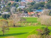 登上伊甸园,登上伊甸园,奥克兰,新西兰村庄  免版税库存图片