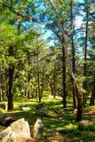 登上克劳福德森林在一天 图库摄影