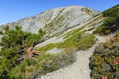 登上圣安东尼奥或登上Baldy,加利福尼亚 库存图片