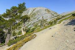 登上圣安东尼奥或登上Baldy,加利福尼亚 图库摄影