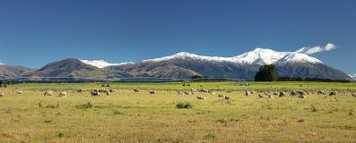 登上泰勒和登上在南部新西兰的赫特风景 库存图片
