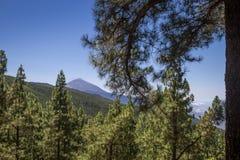 登上泰德峰, Las Lagunetas,特内里费岛,加那利群岛,西班牙全景在针叶树之间的 图库摄影