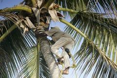 登山人棕榈树 免版税库存照片
