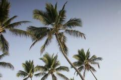 登山人棕榈树 库存图片