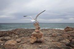登陆在石头的海鸥在majorca海岛的南海岸登上  库存图片