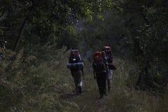 登高在` Wolkberg `山脉,林波波河,南非的一条森林道路的远足者 库存图片