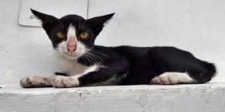黑白与黄色注视猫 免版税库存照片
