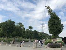 白云队天空蔚蓝、大树和宜人的路 库存图片