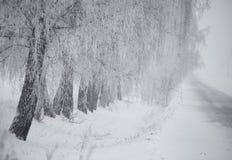 黑白冬天 在雾的桦树 免版税库存照片