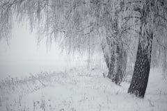 黑白冬天 在雾的桦树 免版税库存图片