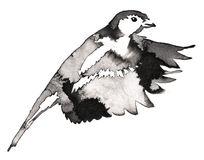 黑白单色绘画用水和墨水得出山雀鸟例证 库存照片