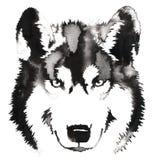 黑白单色绘画用水和墨水得出狼例证 免版税库存照片