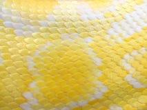 白变种模式皮肤蛇 免版税库存图片