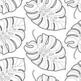 黑白图表热带叶子无缝的样式 免版税库存图片
